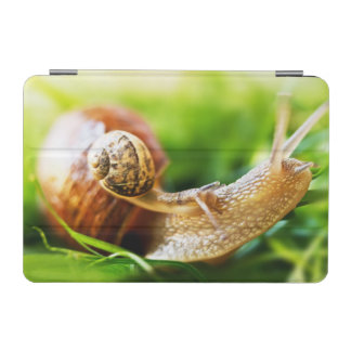 Close up of baby snail on adult snail iPad mini cover