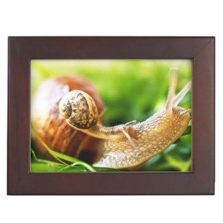 Close up of baby snail on adult snail keepsake box