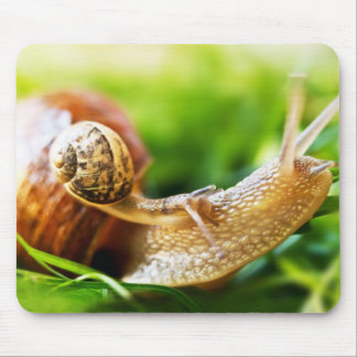 Close up of baby snail on adult snail mouse mat
