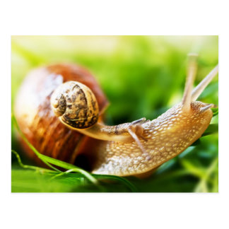 Close up of baby snail on adult snail postcard