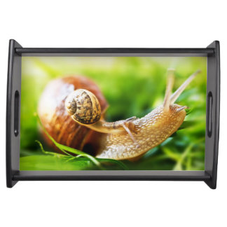 Close up of baby snail on adult snail serving tray