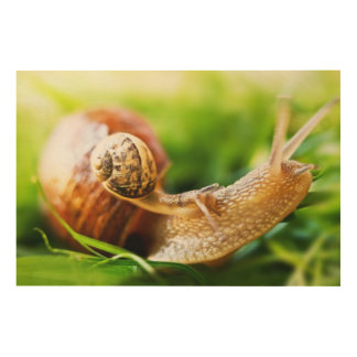 Close up of baby snail on adult snail wood wall art