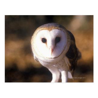 'Close-up of Barn Owl, Land Between Lakes, KY' Postcard