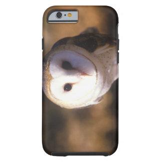 'Close-up of Barn Owl, Land Between Lakes, KY' Tough iPhone 6 Case