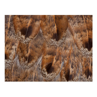 Close Up Of Brown Feathers Postcard