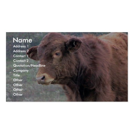 Close-Up Of Brown Hairy Cow In A Wide Meadow Business Card