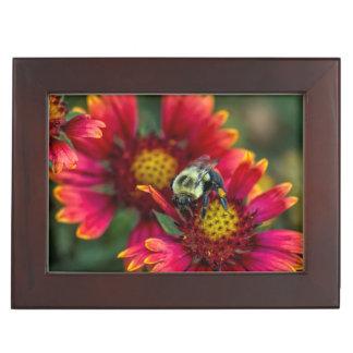Close-up of bumblebee with pollen basket keepsake box