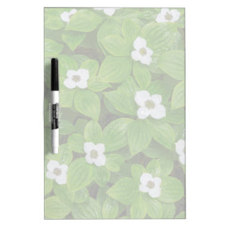Close-up of bunchberry with white flowers dry erase board
