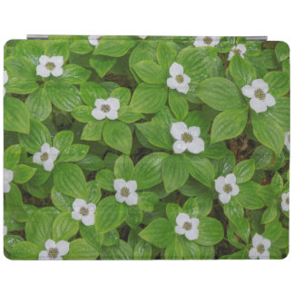 Close-up of bunchberry with white flowers iPad cover