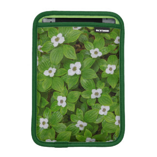 Close-up of bunchberry with white flowers iPad mini sleeve