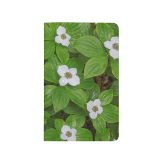 Close-up of bunchberry with white flowers journal