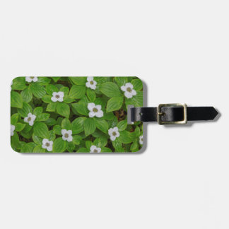 Close-up of bunchberry with white flowers luggage tag