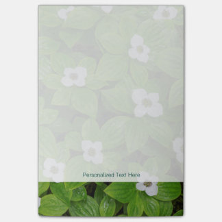 Close-up of bunchberry with white flowers post-it notes