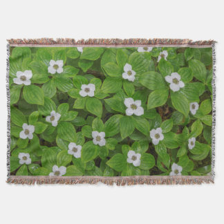 Close-up of bunchberry with white flowers throw blanket