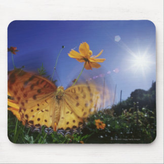 Close-up of butterfly, flapping wings mouse pad