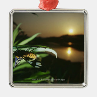 Close-up of Butterfly on leaf at sunset Christmas Ornament