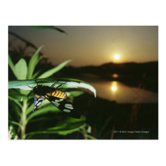 Close-up of Butterfly on leaf at sunset Postcard