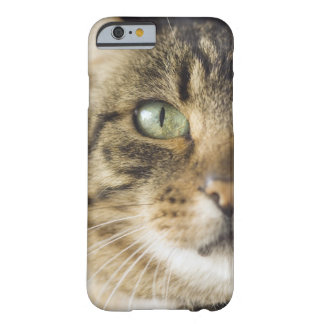Close-up of cat (focus on eye) barely there iPhone 6 case