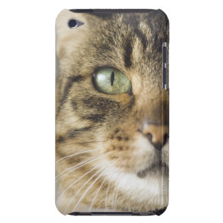 Close-up of cat (focus on eye) barely there iPod cases