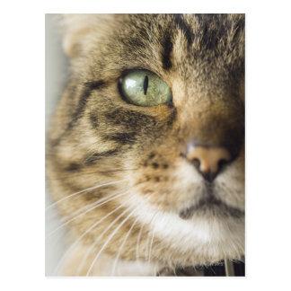 Close-up of cat (focus on eye) postcard
