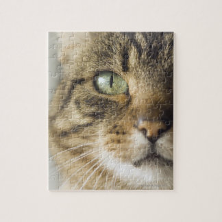 Close-up of cat (focus on eye) puzzle