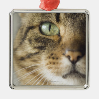 Close-up of cat (focus on eye) Silver-Colored square decoration