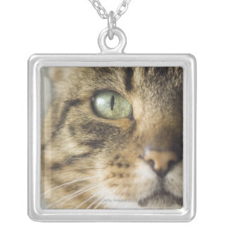 Close-up of cat (focus on eye) silver plated necklace