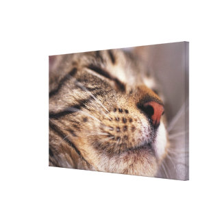 Close-up of cat whiskers and muzzle canvas print