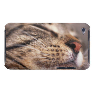 Close-up of cat whiskers and muzzle iPod touch cover