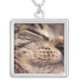 Close-up of cat whiskers and muzzle silver plated necklace