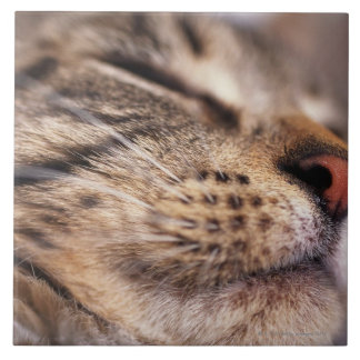 Close-up of cat whiskers and muzzle tile