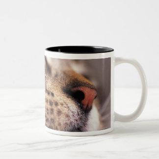 Cat In The Hat Mug Uk