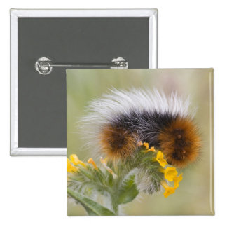 Close-up of caterpillar on flower. Credit as: 15 Cm Square Badge