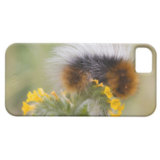 Close-up of caterpillar on flower. Credit as: iPhone 5 Cover