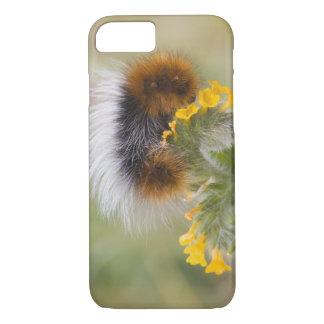Close-up of caterpillar on flower. Credit as: iPhone 7 Case