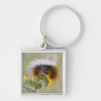 Close-up of caterpillar on flower. Credit as: Silver-Colored Square Key Ring