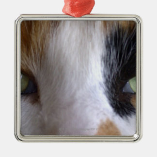 Close-up of cat's eyes christmas ornament
