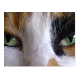 Close-up of cat's eyes postcard