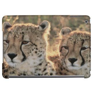 Close-up of Cheetahs