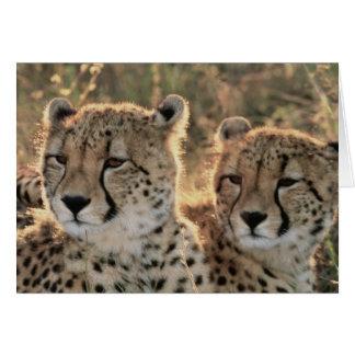 Close-up of Cheetahs Card