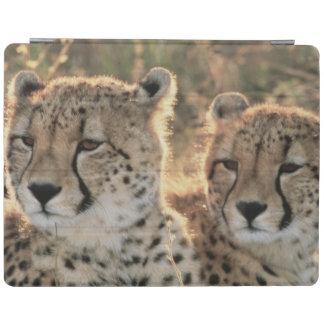Close-up of Cheetahs iPad Cover
