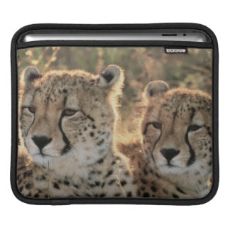 Close-up of Cheetahs iPad Sleeve