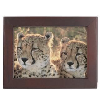 Close-up of Cheetahs Keepsake Boxes