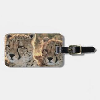 Close-up of Cheetahs Luggage Tag