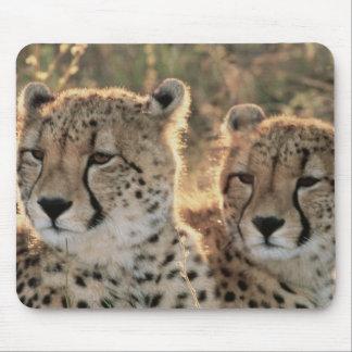 Close-up of Cheetahs Mouse Mat