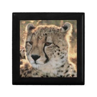 Close-up of Cheetahs Small Square Gift Box