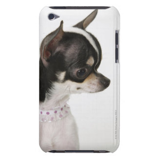 Close-up of Chihuahua, side view Barely There iPod Cover