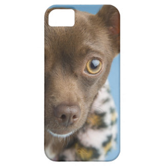 Close-up of chihuahua with furry collar barely there iPhone 5 case