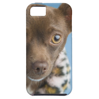 Close-up of chihuahua with furry collar iPhone 5 case