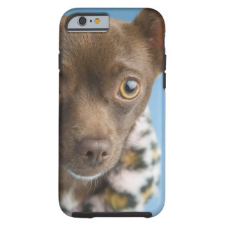 Close-up of chihuahua with furry collar tough iPhone 6 case